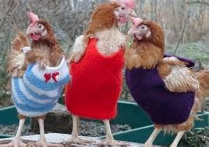 dressing chickens
