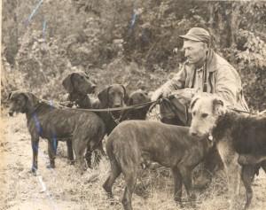 fox hound dogs