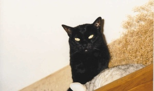 Katie Scarlet was a typical mysterious black cat.